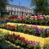 Фестиваль цветов в Тамбове пройдет с 17 по 19 мая
